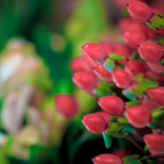 Fond d'écran fleurs